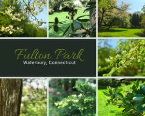 Mediagraphyx.com_Fulton-Park_Waterbury-CT_1